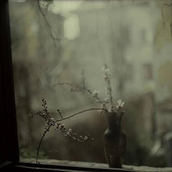 Dear April by Katia Chausheva