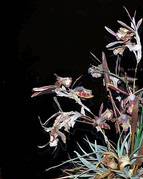 Death of an Orchid  by Sandy Poore