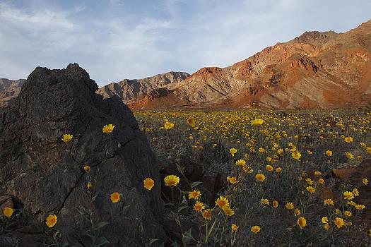 Susan Rovira - Death Valley Spring 1