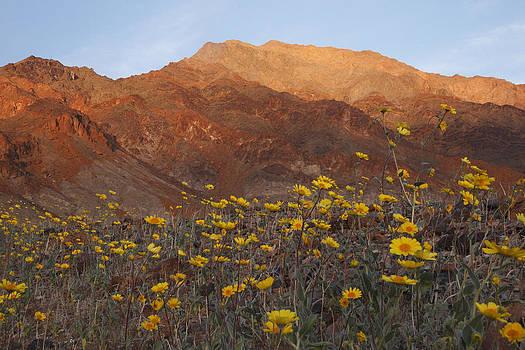 Susan Rovira - Death Valley Spring 2