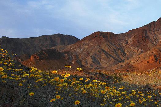 Susan Rovira - Death Valley Spring 3