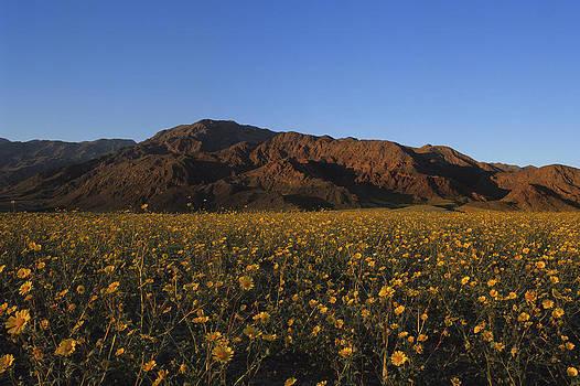 Susan Rovira - Death Valley Spring