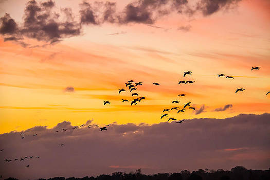 December Geese at Sun Set by Brian Williamson