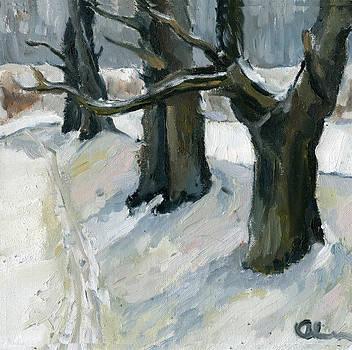 December Oaks by Lelia Sorokina