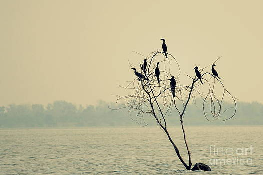 Decision tree by Vishakha Bhagat