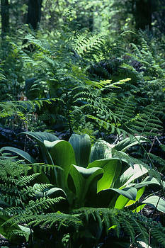 Deep Forest Green by Jim Cotton