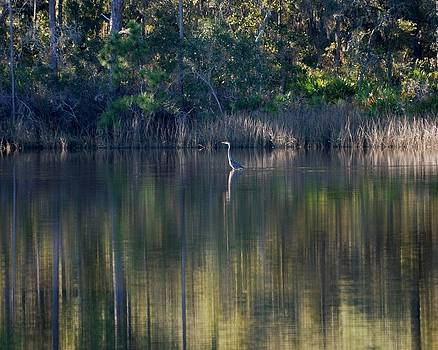 Deep Reflections by Robbie L Rogers