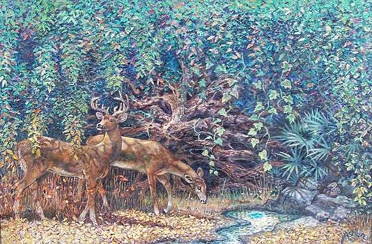 Deer at Juniper Springs by Sheila Tibbs