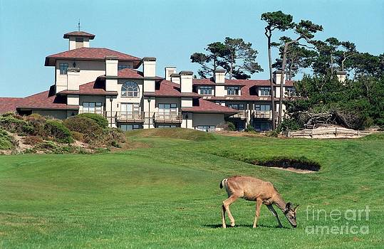 Deer at Spanish Bay by James B Toy