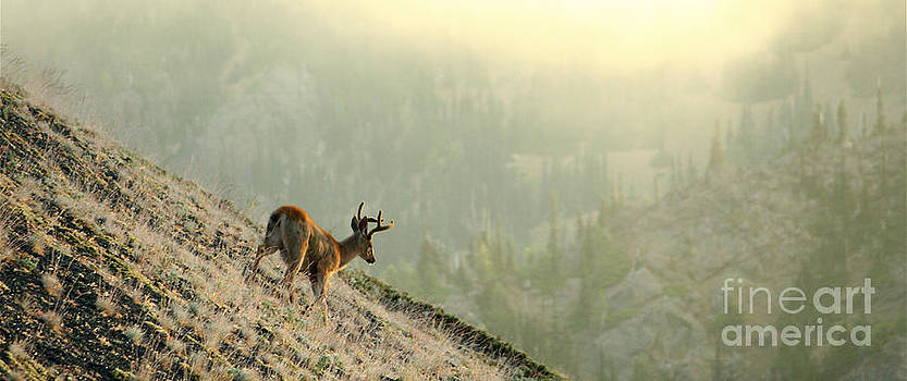 Deer at Sunrise by Denise Lilly