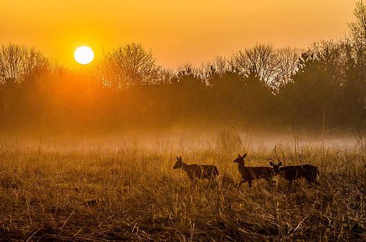 Deer at Sunrise by Todd Heckert