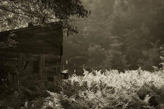 Scott Hovind - Deer Blind