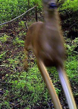 Deer Bounding by David Olson