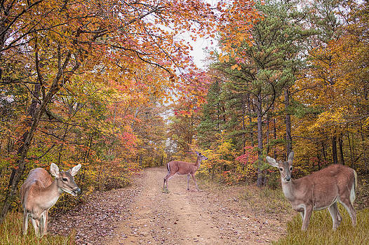 Deer Crossing by Bonnie Barry