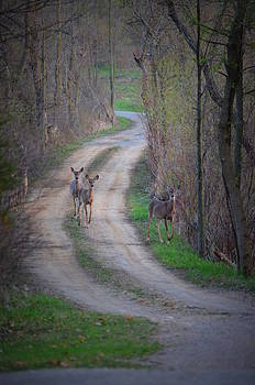 Deer Crossing by Jennifer  King