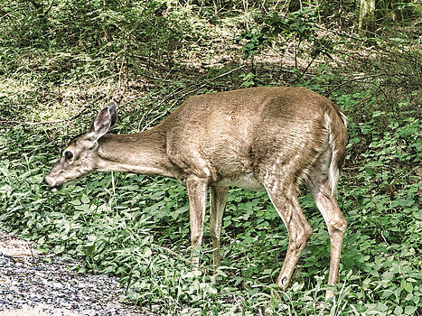 Deer Crossing by Oscar Alvarez Jr