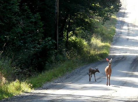 Deer Crossing by Steven Valkenberg