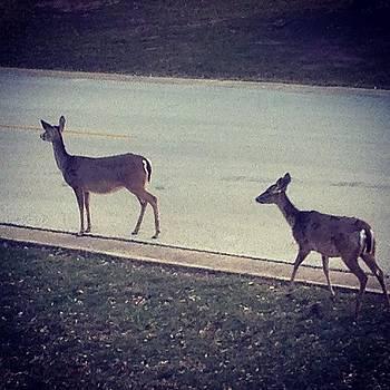 #deer by Elisabeth Prudente