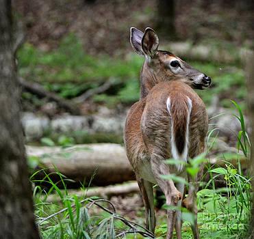 Deer Hearing Something by Eva Thomas