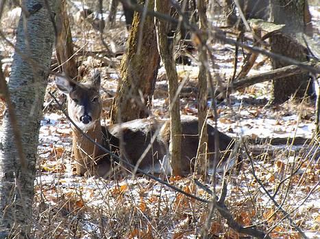 Robyn King - Deer Impressions