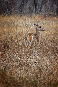 Ray Van Gundy - Deer in Field