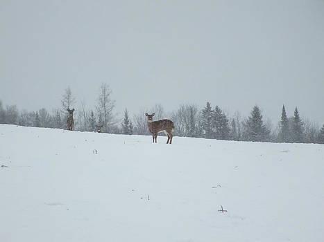 Deer in Storm 1 by Gene Cyr