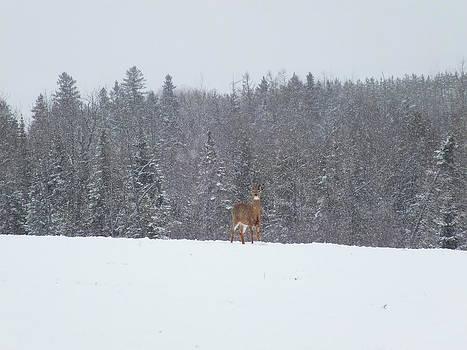Deer in Storm 2 by Gene Cyr