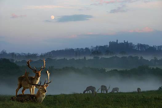 Deer in the mist by Gillian Dernie