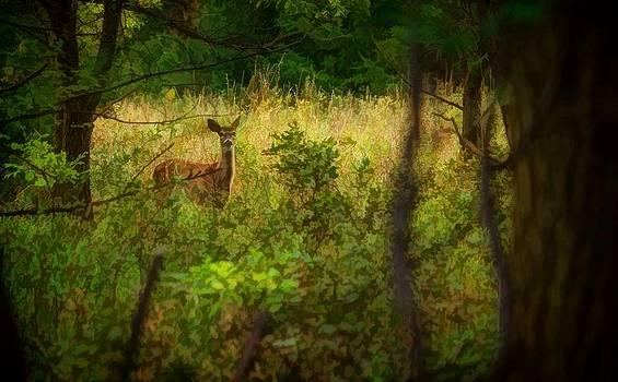 Ray Van Gundy - Deer in the Woods