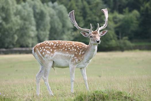 Mark Severn - deer