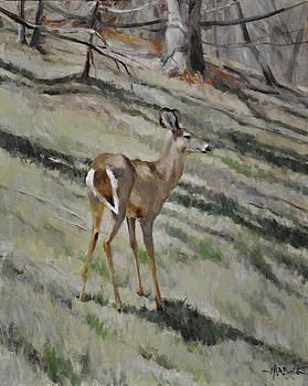 Deer on Hillside by Scott Harding