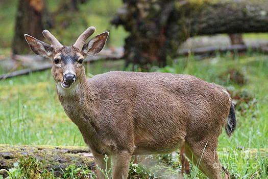 Deer profile. by Walter Strausser