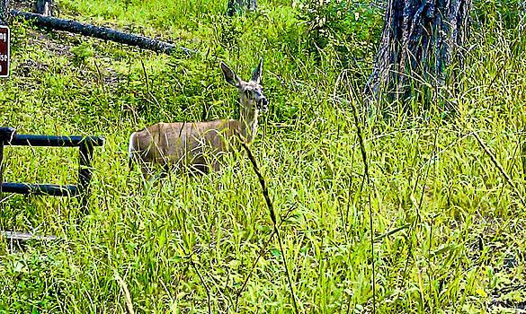 Deer  by Rusty Jeffries