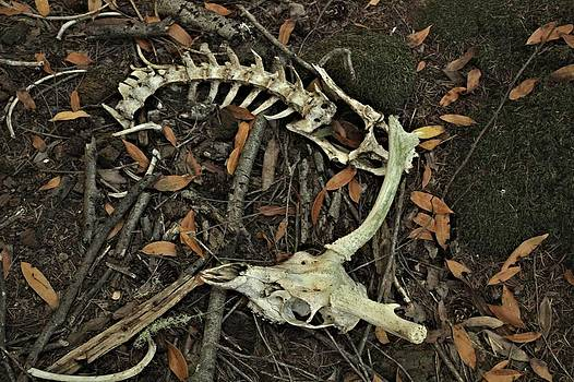 Deer Skull and Vertebrae by Elery Oxford