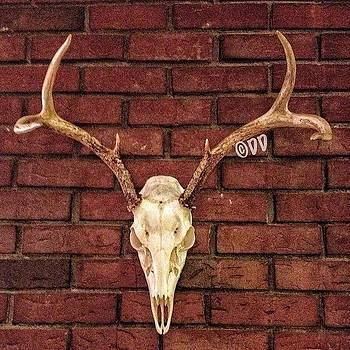 Deer Skull by Danielle McNeil