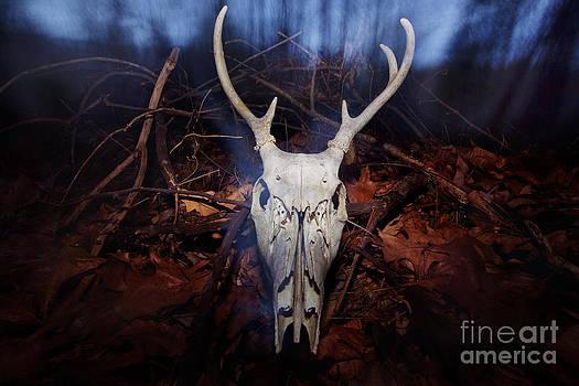 Jonathan Welch - Deer skull