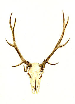 Deer Skull by Michael Vigliotti