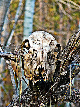 Deer Skull Totem by Chris Sotiriadis