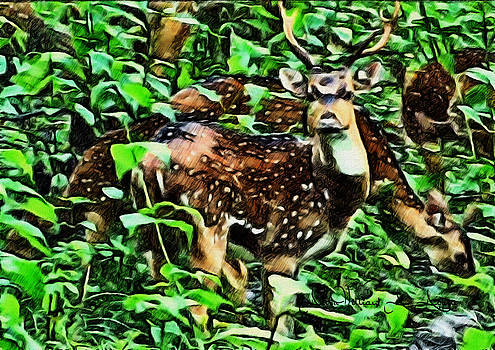 Deer's Green Day by Withintensity  Touch