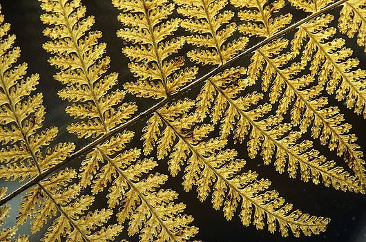 Delicate Fern by Julie Grandfield