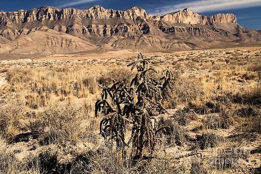 Adam Jewell - Delicate Landscape