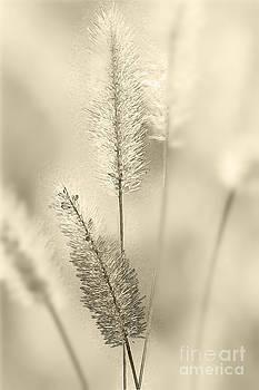 Heiko Koehrer-Wagner - Delicate Sweetgrass