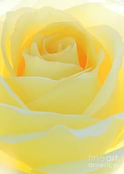 Sabrina L Ryan - Delicate Yellow Rose