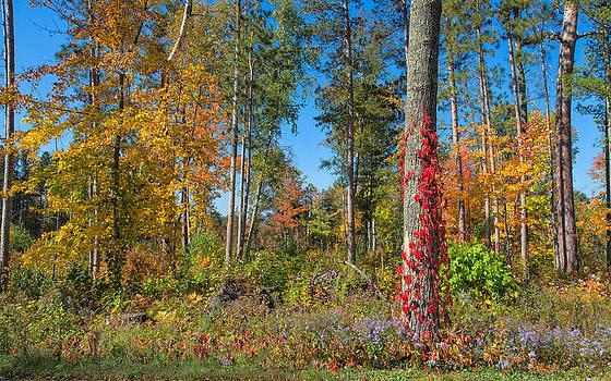 Delightful Forest by John M Bailey