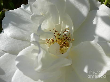 Delightful Gentility by Anat Gerards