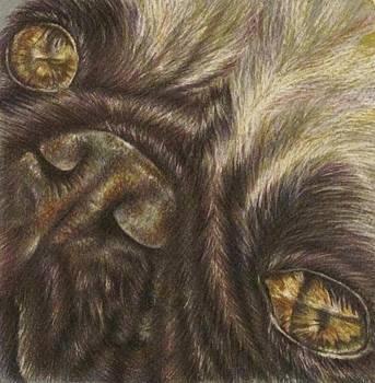 Demille the Pug by Lisa Marie Szkolnik