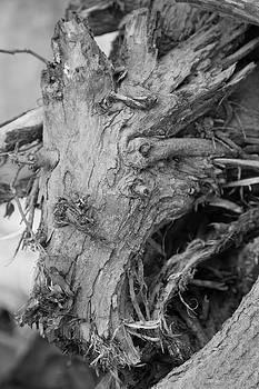 Kantilal Patel - Demon in the Wood