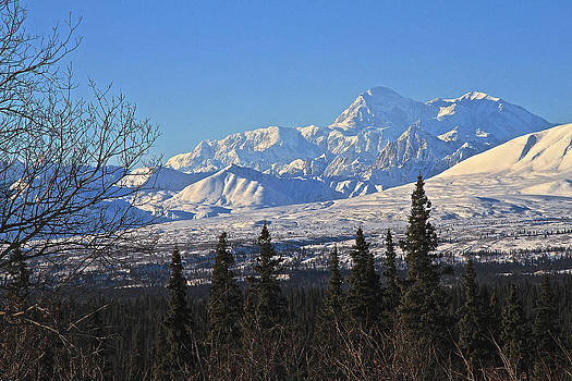 Denali Winter by Donna Quante
