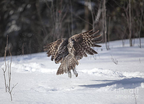 Depart / Take Off by Nicole  Cloutier Photographie Evolution Photography