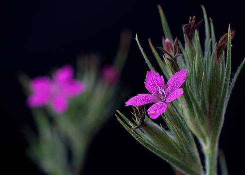 Depthford Pink by Ben  Keys Jr